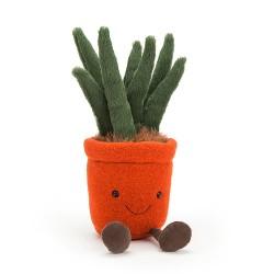 Yucca en pot