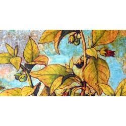 Belle plante : collection...