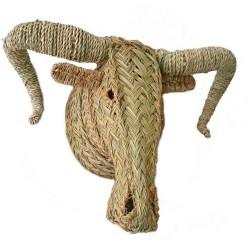 Tête de mouflon