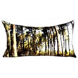 Forêt de pins des Landes